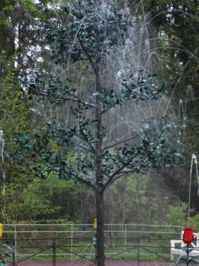Peterhof - Tree Fountain