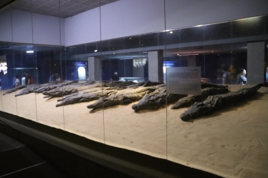 Mummified Crocodiles (2)