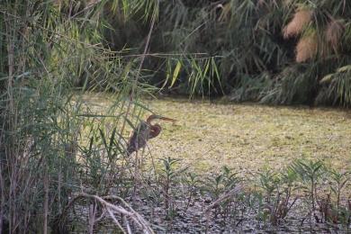 Aswan - River & Birds (3)