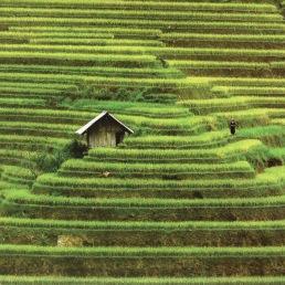 Rice Terraces_20190219_091749